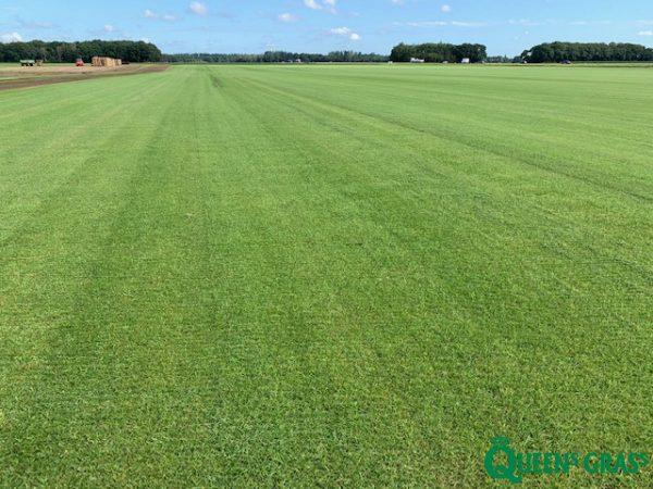 John Schmitz Hoveniers Assen - Queens grass veld